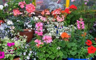 7 самых популярных комнатных растений — и советы по уходу за ними