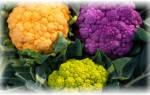 10 лучших сортов цветной капусты — Рейтинг 2020 года (Топ 10)
