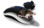 Какая мышь лучше — лазерная или оптическая?