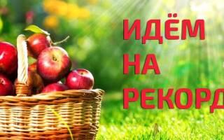Краткий обзор Элвин СУ-1 — Август 2015
