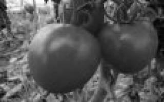 10 лучших помидоров для засолки — Рейтинг 2020 года (Топ 10)