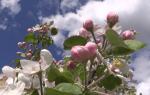 Обработка деревьев весной: чем, зачем и в какие сроки