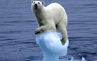 Какой климатический класс холодильника лучше?