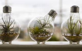 8 лучших ламп для аквариума